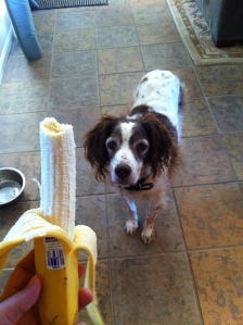 """Abbey says """"Hi, can I have some of that fantastic looking banana?"""" - 110 calories"""